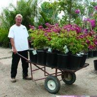 Adam Halls Plant Nursery