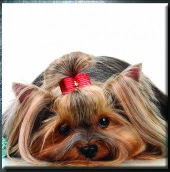 Doggie Day Spa